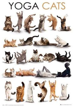 Yoga Cats Doing Various Yoga Poses