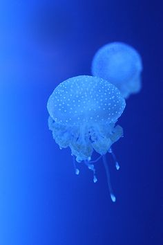 nobodyfromsomewhere:    Jellyfish by *RobinHedberg