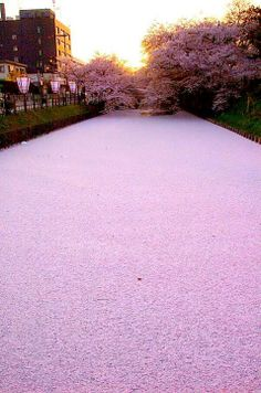 Joe Inoue — Cherry Blossom River