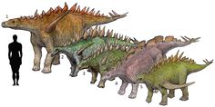 "1.Dacentrurus armatus (""tail full of points"") 1902 Chordata/Reptilia/Ornithischia/Stegosauria/Stegosauridae/Dacentrurinae  2.Lexovisaurus durobrivensis (""Lexovii lizard"") 1957 Chordata/Reptilia/Ornithischia/Stegosauria 3.Huayangosaurus taibaii (""Huayang lizard"") 1982 /Stegosauria/Huayangosauridae 4.Wuerhosaurus homheni (""Wuerho lizard"") 1973 Stegosauridae/Stegosaurinae 5.Gigantspinosaurus sichuanensis (""giant-spined lizard"") 1992 Chordata/Reptilia/Ornithischia/Stegosauria"