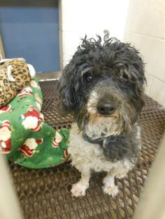 Thank you for considering a companion animal from the Sauk County Humane Society located in Baraboo, Wisconsin. If you are interested in one of our animals, please come in and complete the adoption application on your perfect match. Our open hours...