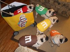 These pugs are killing it with their Halloween costumes! Here is the proof that pugs are winning the award for best in Halloween wear. Pugs In Costume, Pet Halloween Costumes, Diy Dog Costumes, Costume Ideas, Halloween Ideas, Puppies In Costumes, M&m Costume, Halloween Pictures, Chien Halloween