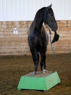 Canadian Horse gelding Cesar Canadian Horse, Black Canadians, Horses For Sale, Ranch, Guest Ranch