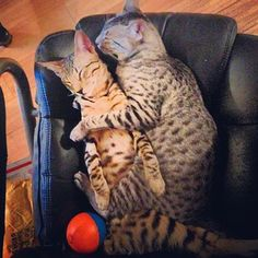 Nylah & Bambu is sleeping and They are so cute!
