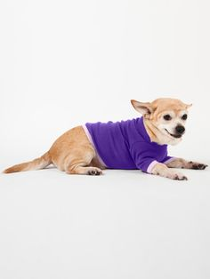 The Dog T by #AmericanApparel.  #pets #dogs