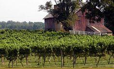 Corcoran Vineyards, Waterford, Virginia
