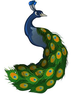 Illustrate a Peacock (a how-to)