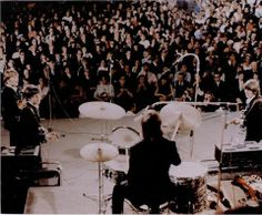 Look at Ringo!!