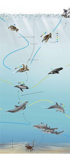 El 'Gran Hermano' de los océanos