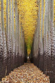 TREE ~ TREES ♡