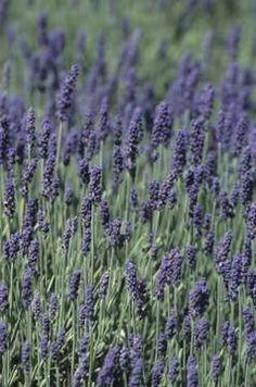 10 Plants For Windy Gardens Farming Garden Shrubs
