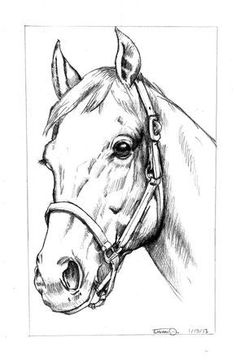 art rhwapous easy horse drawing in pencil easy horse - horse pictures drawing Horse Head Drawing, Horse Pencil Drawing, Horse Drawings, Art Drawings Sketches, Animal Drawings, Drawing Drawing, Pencil Art, Drawing Tips, Drawing Ideas