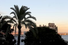 Blick aufs Meer vom BQ Augusta Hotels, Das Hotel, Seattle Skyline, Holiday, Travel, Majorca, Vacations, Viajes, Holidays