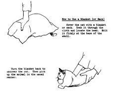 kitty burrito restraint