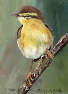 """Daily Paintworks - """"Willow Warbler ACEO"""" - Original Fine Art for Sale - © Janet Graham"""