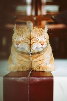 seeing double | pet photography #cats