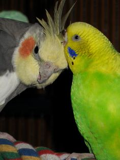 Bird's are my favorite, but here are a few breeds I have.  Brielle, my daughter loves them.