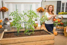 @ShirleyBovshow shares how to ripen your end-of-summer tomatoes before it's too late! Edible Garden, Easy Garden, Garden Tips, Garden Ideas, Home And Family Tv, Summer Tomato, Green Tomatoes, Tomato Plants, Gardening For Beginners