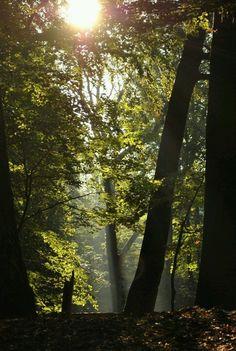 Märchenwald by Katrin Fröhlich