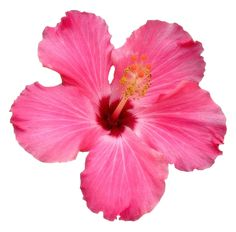 Elegant Png Flowers Tumblr