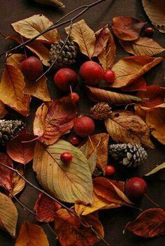 Des petits fruits, des feuilles et des branches...