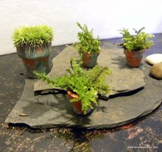 Miniature potted moss