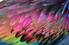 ♥FLF♥ 78 PARROT FEATHERS