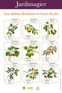 Jardimagier : Les arbres fruitiers et leurs fruits French Education, Teaching French, Plantation, Fruit Recipes, Botany, Beautiful Gardens, Montessori, Farmer, Plants