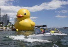 Giant rubber duck draws crowds | Toronto & GTA | News | Toronto Sun