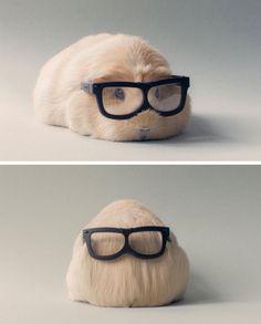 Meerschweinchen sind auch schlau!