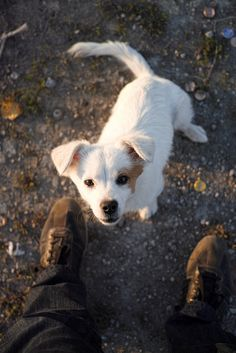 Corgi, Wordpress, Blog, Animals, Cats, Pet Dogs, The Great Outdoors, Animales, Corgis