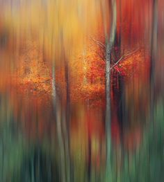 Colour Explosion by Magda  Bognar on 500px