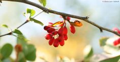 Berberine may benefit metabolic conditions, heart health, inflammation, and more, yet it's not widely available in the supplement market.