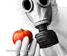 Russia considering total GMO Ban~  (NaturalNews) The Russian government has ordered all relevant agencies to examine whether or not to continue imports of genetically modified organisms (GMOs) into the country.  Learn more: http://www.naturalnews.com/042325_GMO_ban_Russia_genetically_modified_crops.html#ixzz2ggayEfB2
