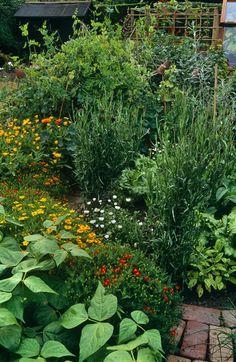 Garden Photos (640 of 765) - Lonny