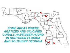 Agatized Coral Locations - Re-Wilding West Florida, Florida Georgia, Central Florida, Rock Tumbling, Honeymoon Island, Rock Hunting, Rock Collection, Rocks And Minerals, Travel With Kids