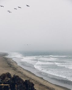 Fading coastal horizons majestic creatures appearing out of the fog without a care in the world some places feel like a dream. Have wonderful Friday all.