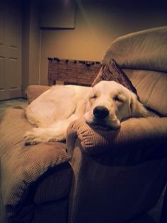 asleep on her favourite chair Chair, Dogs, Animals, Animais, Animales, Animaux, Pet Dogs, Doggies, Animal