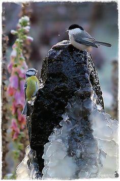 Suvikumpu Birds, Animals, Animales, Animaux, Bird, Animal, Animais
