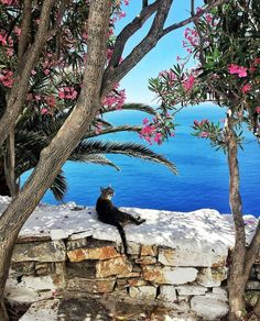 Cats being cats in Greece (@catsandgreece) • Instagram photos and videos