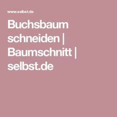 Buchsbaum schneiden   Baumschnitt   selbst.de