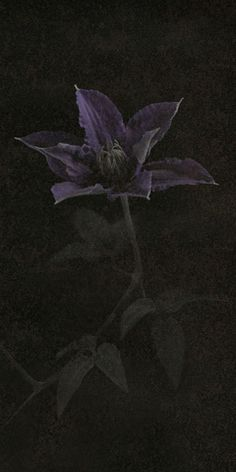 """Flowers in Neutral Moment-2015 """" Clematis """" Archival pigment print Printed on cotton rag fine art paper Photo by Soichi Oshika"""