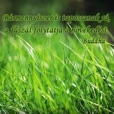 Bármennyiszer is tapossanak rá, a fűszál folytatja a növekedést. - Buddha # www.facebook.com/angyalimenedek