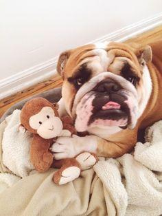 Bit It S My Monkey