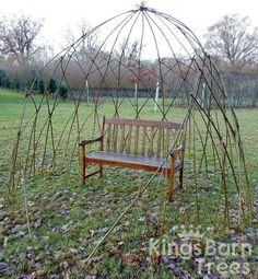 Living Willow Pod - available as DIY Kit! @ Kings Barn Trees