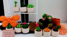 mini cactus collection