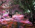 Amazing Tree Tunnels