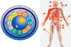 Jak se léčit a harmonizovat zdraví díky orgánovým hodinám - Slunečný život