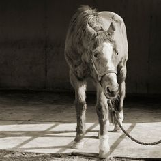 This Photographer Captures the Beauty And Dignity of Elderly Animals  Read more: http://blogs.smithsonianmag.com/smartnews/2013/11/this-photographer-captures-the-beauty-and-dignity-of-elderly-animals/#ixzz2jztR9UjJ  Follow us: @Smithsonian Magazine on Twitter
