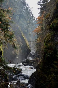 Englishman River Falls by flicker:, via Flickr - Vancouver Island, BC